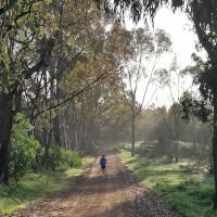 Adrian Lehmann im Eukalyptuswald